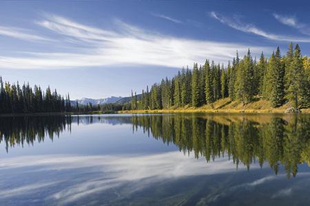 Environment Lake Pine Trees