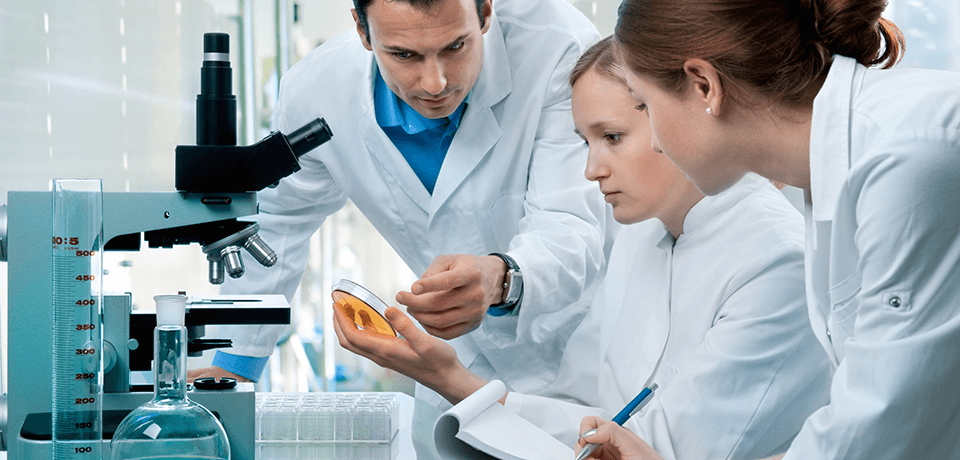 Three scientists looking at a petri dish.