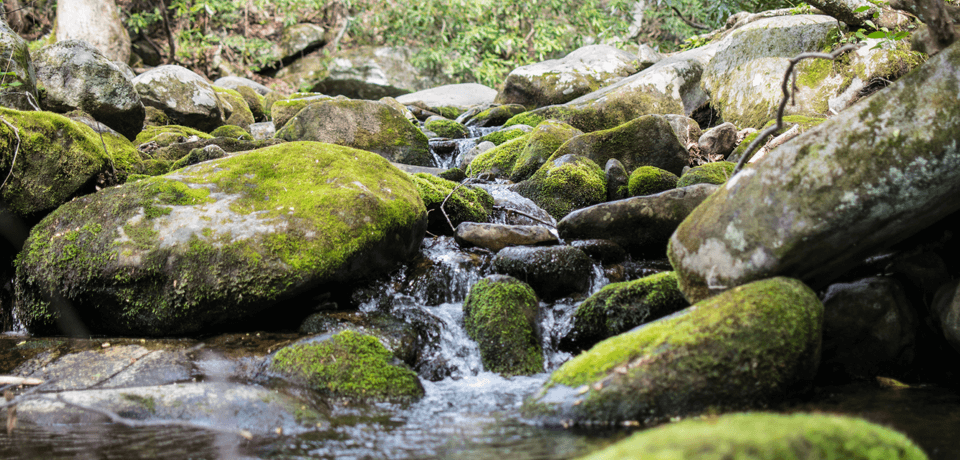 Clean Running Water Over Rocks In Forest