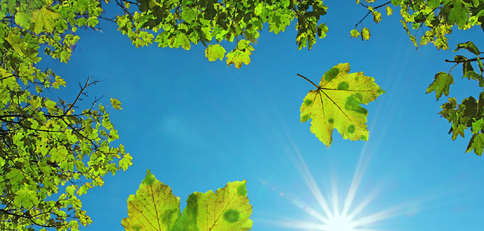 Leaves on Trees and in Sky